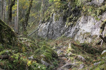 Urwald im Nationalpark