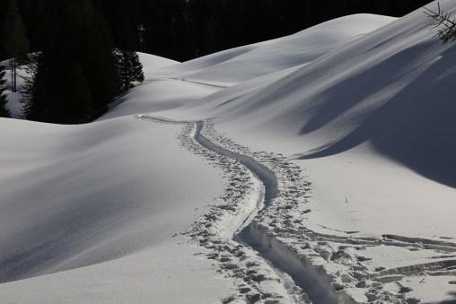 Schneeschuhspur auf der Forststraße