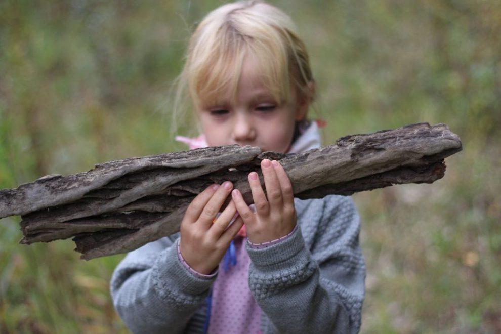 Der Wald ist ein einzigartiger Lehrmeister