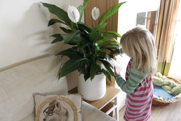 Der AIRY pot. Frischluft aus dem Blumentopf und Verlosung!