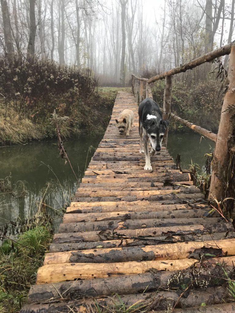 Hunde auf Holzsteg