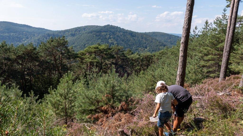 Wandern Kinder Pfälzerwald