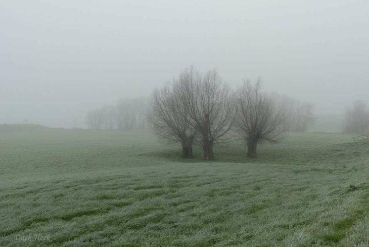 Dunst der Stunde: Kopfweiden im Nebel (Foto: Duck Heek)