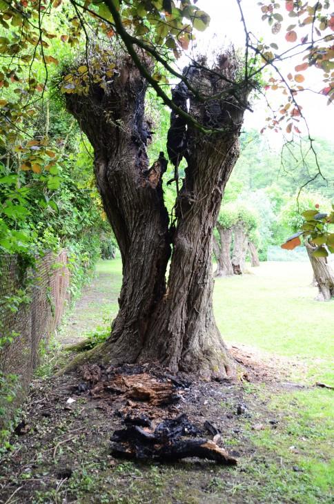 Baum, ultrahocherhitzt (Foto © cs)