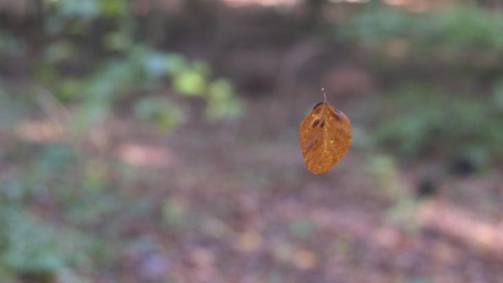 Ever catch a falling leaf
