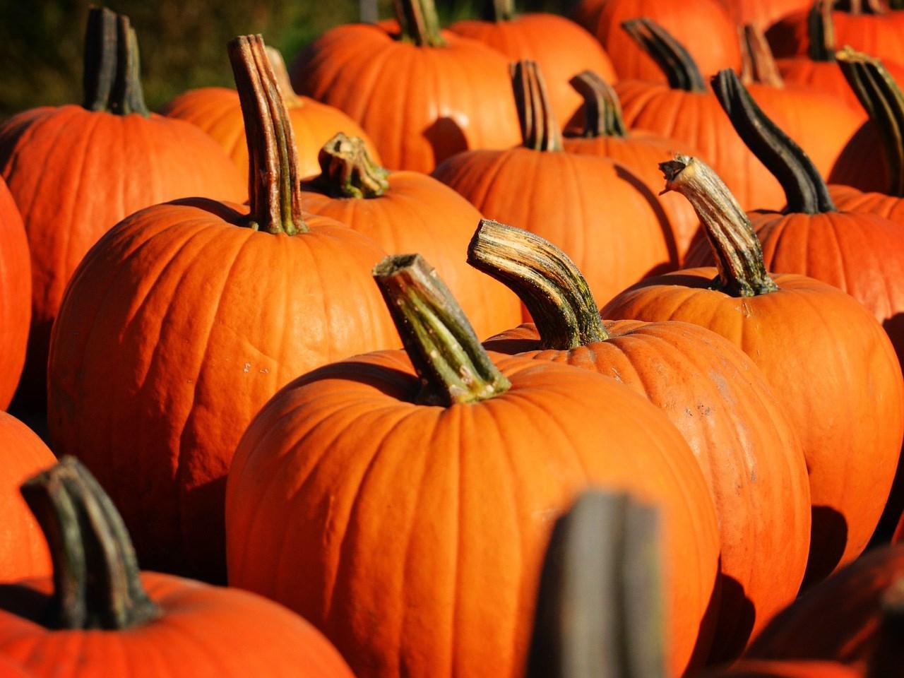 pumpkins_1538693150255.jpg