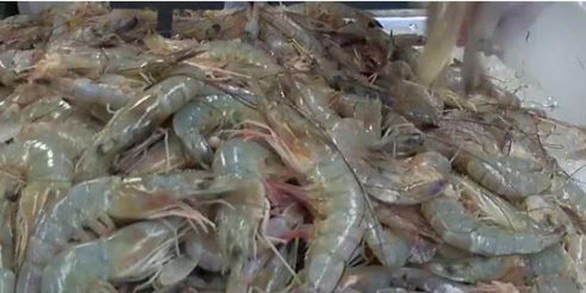 shrimp_1560717428943.jfif.jpg