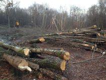 Ein trauriges Bild. - Danneröder Wald am 30.11.2020 (C) Uli Mandel