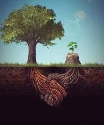 Wurzeln eines Baumstumpfs begrüßt die Wurzel eines lebenden Baumes