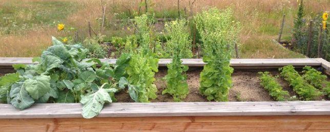 Urbanes Gärtnern in der Kornmersch (C) U. Mandel