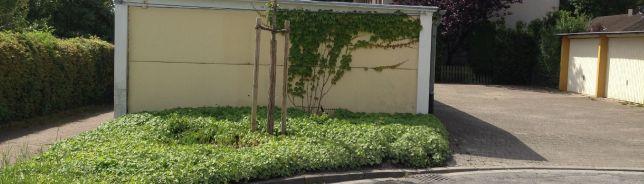 Städtischer Straßenbaum (Pflanzung 2019)