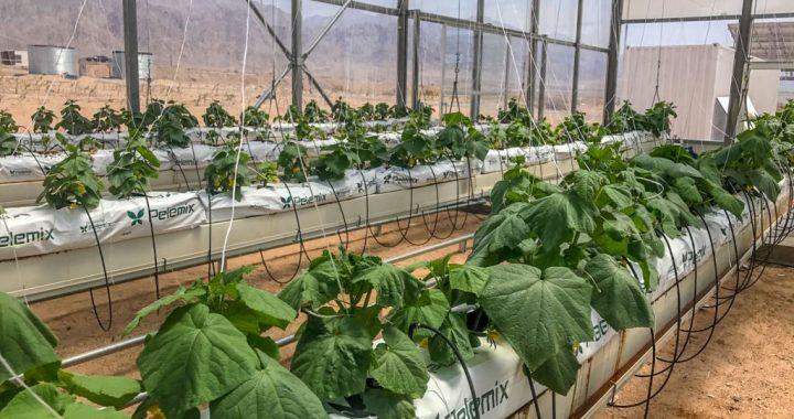 """Sahara Forest Project: un programma """"nobile"""" e sostenibile"""