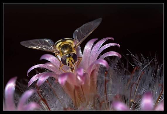 Imagenes de abejas
