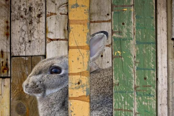 Fotografia conejo