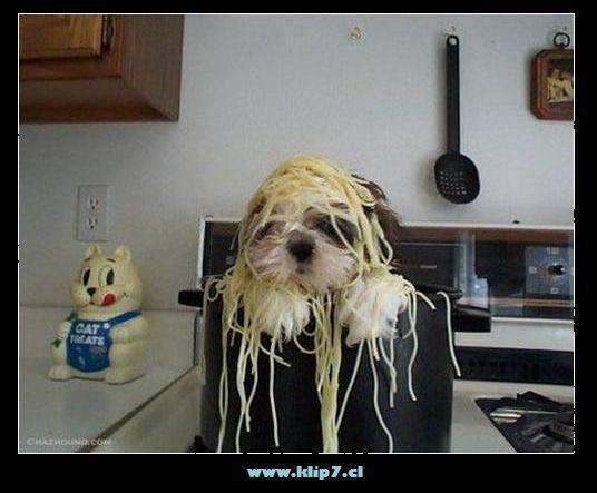 imagenes divertidas, Fotos locas: perro goloso