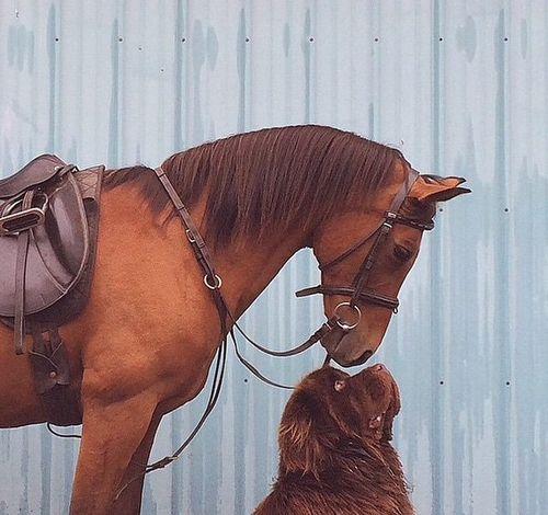Foto tierna de caballo y perro
