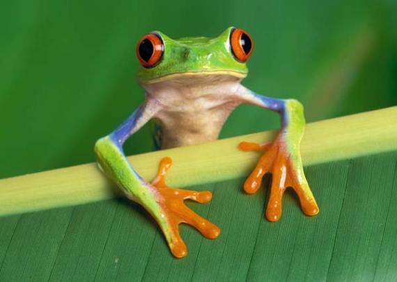 Fotografia de rana con cara chistosa