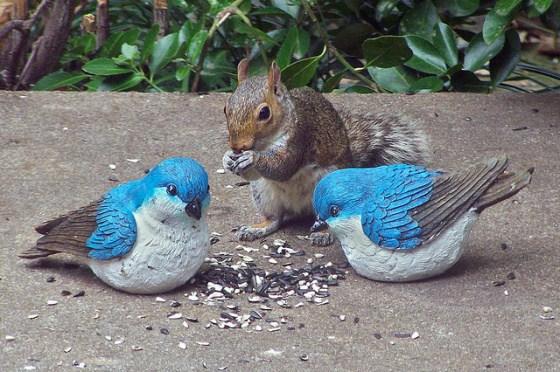 imagenes de ardillas con pajaritos azules comiendo juntos