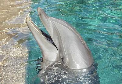 imagenes y fotografias de delfines