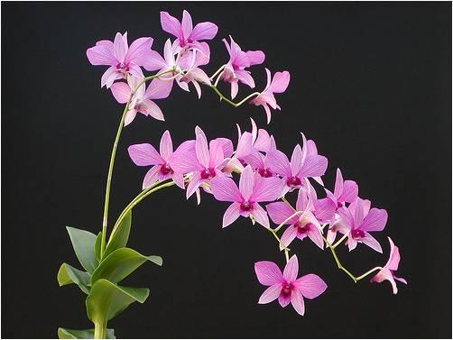 Imagenes de delicadas flores rosadas