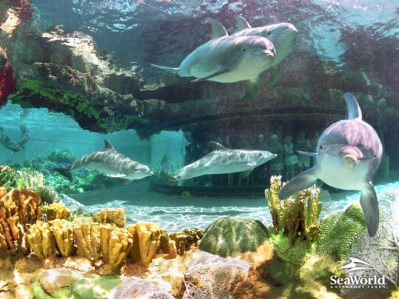 Hermosa fotografia de delfines pajo el agua