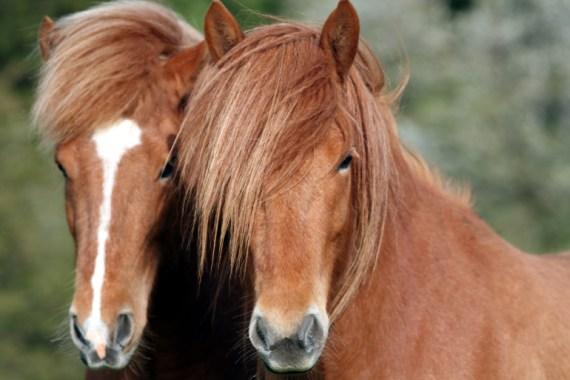 _160413-potrillos-caballo-mustangs-peleando-foto-manada-fotografias-caballo-imajen-corcel-yegua-imagen-potro