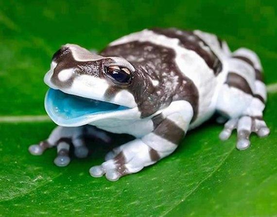 Imagen rara rana blanco y negro