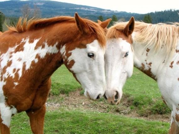 Tierna imagen de dos caballos