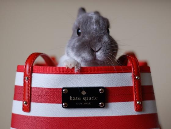 Fotografia de conejo saliendo de un bolso