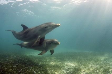 Imagen de delfines nadando bajo el mar