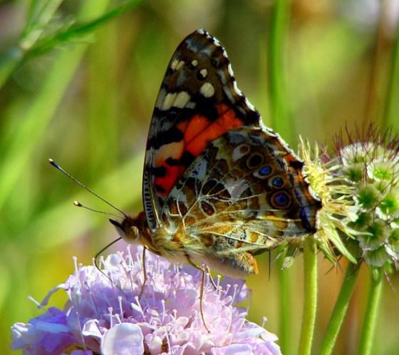 fotografias de mariposas