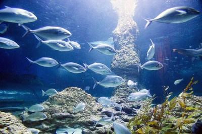 Imágenes mundo submarino