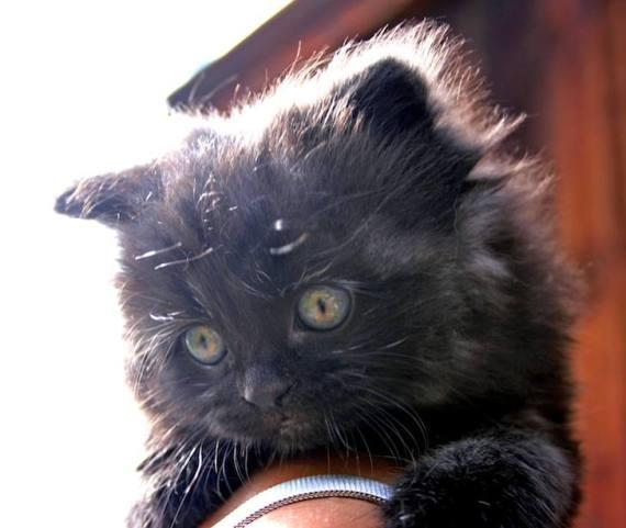 Imagen tierna de gatito negro