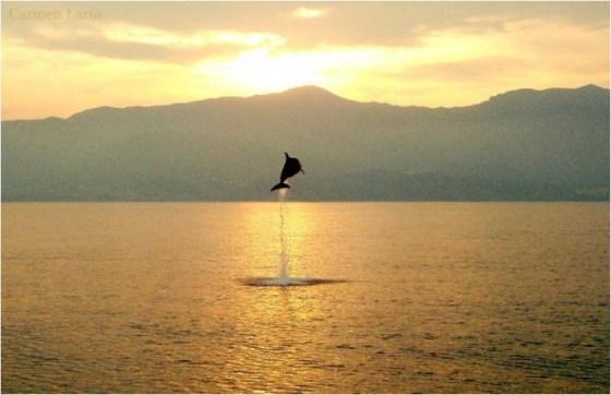 Imagen de delfin saltando sobre el mar al atardecer