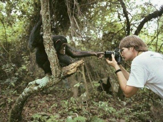 Imagenes divertidas: mono y fotografo