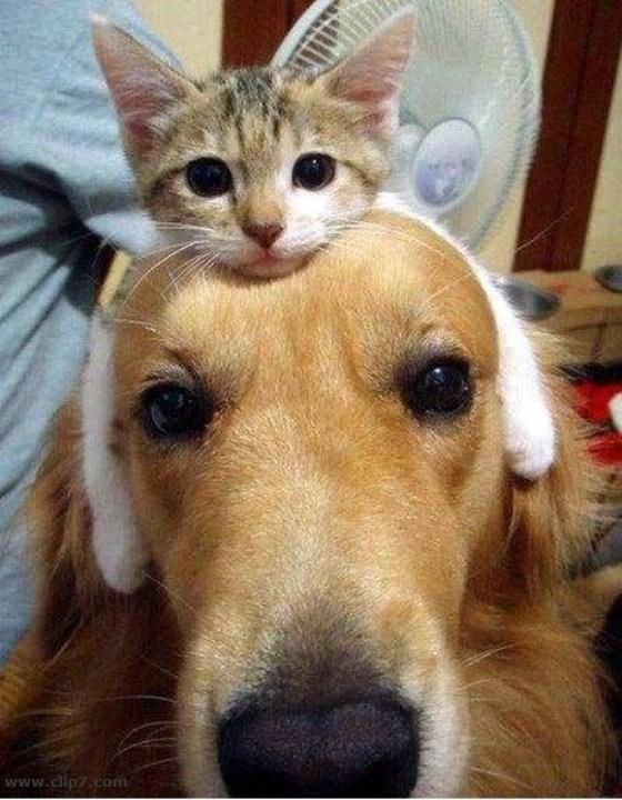 depresion post vacaciones de las mascotas perros y gatos