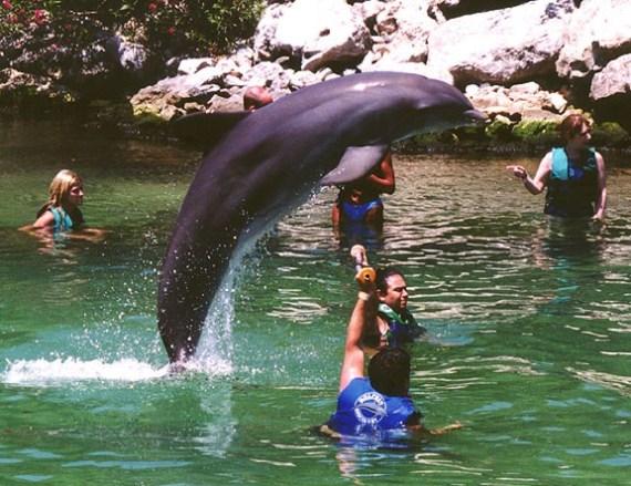 imagenes de delfines saltando sobre el agua