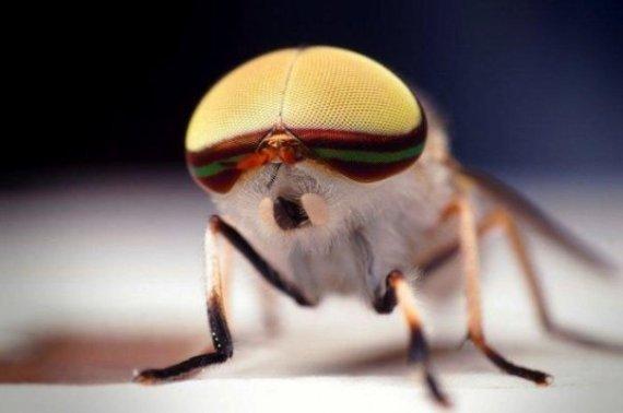 Imagen close-up de ojos de insecto