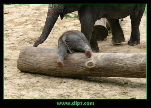 imagen tierna de elefante bebe jugando