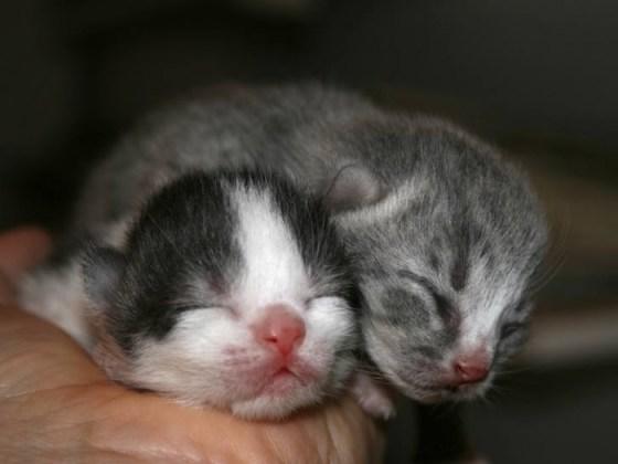 Fotografia de tiernos gatitos bebes