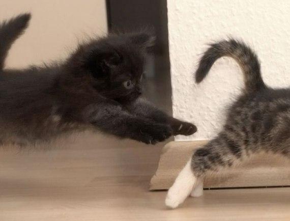 imagenes de gatos jugando