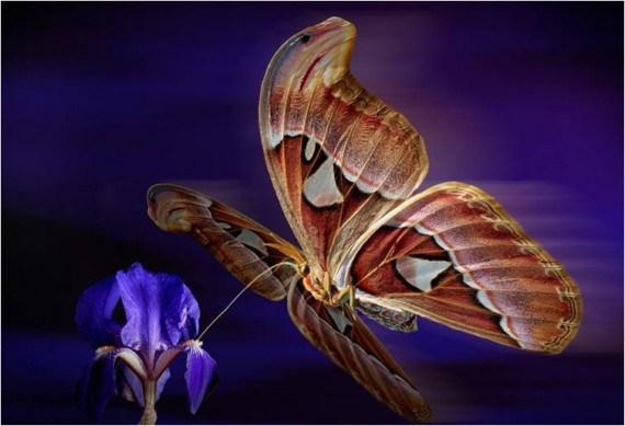 hermosa imagen de fantasia de mariposas