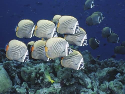 imagenes del mundo marino