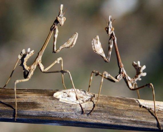 Imagen de raros insectos