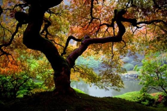 Foto de arbol otoñal colorido