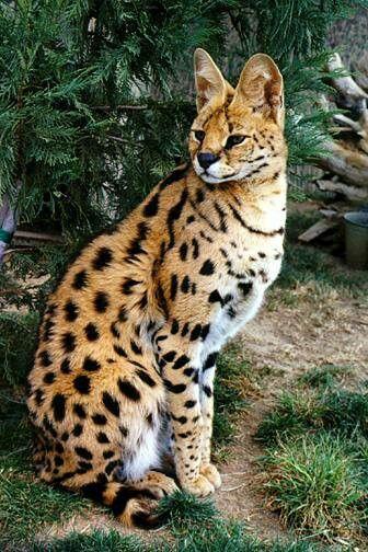 Imagenes de felinos