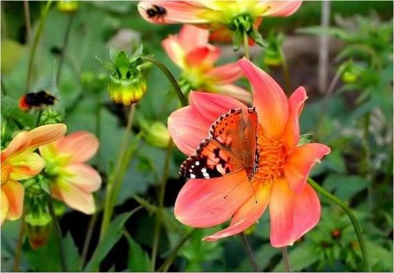 Fotografia de mariposa posada en una flor