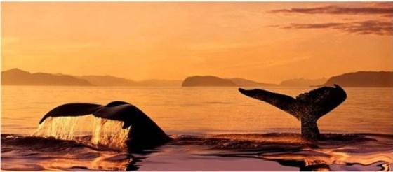 Imágenes Varias: Colas de ballenas en el mar