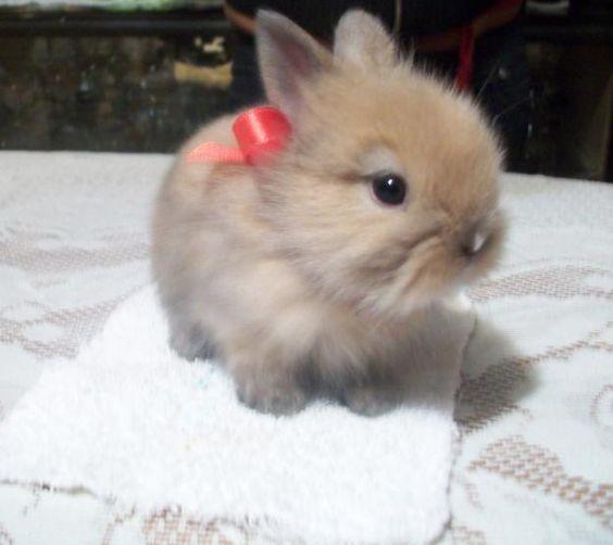 Tierno regalo de conejito bebe