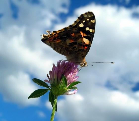 Imagen de mariposa sobre una flor